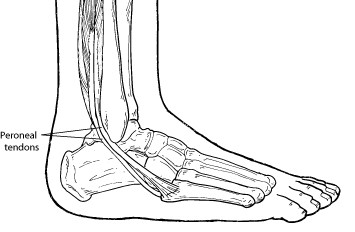 peroneal tendons uk